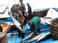 Kaum nelayan provinsi Binh Dinh mencapai panenan raya dalam penangkapan ikan awal tahun baru