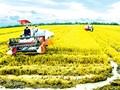 メコンデルタでの農業の大規模化へ向けて