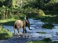 ダクラク省における野生ゾウ群れの保護