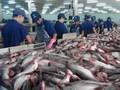 越南将于10月举行茶鱼及水产品交易会