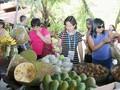 多场有关粮食和农产品的研讨会在芹苴市APEC粮食安全周期间举行
