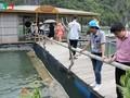Kaum nelayan di teluk Ha Long: Mengusahakan mata pencaharian berkat hidup secara harmonis dengan laut