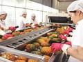 Memperluas pasar ekspor hortikultura Vietnam