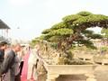 Triển lãm cây cảnh tại Hà Nội thu hút hàng vạn khách tham quan
