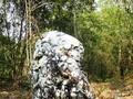 El culto a la deidad de la Piedra Sagrada de los Ha Nhi