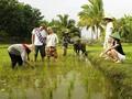 Penjelasan tentang jasa homstay di Vietnam