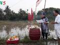 Pesta Turun ke Sawah yang khas dari warga Kotamadya Quang Yen, Propinsi Quang Ninh