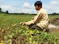 农业保险——支持农民和农村的大政策