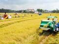 จังหวัดท้ายบิ่งห์พัฒนาเศรษฐกิจการเกษตร