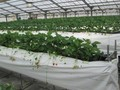 Thành phố Hồ Chí Minh và tỉnh Hokkaido (Nhật Bản) tăng cường hợp tác lĩnh vực nông nghiệp, thủy sản