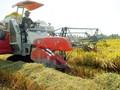 Khu vực nông thôn là chìa khóa tăng trưởng kinh tế tại các nước đang phát triển