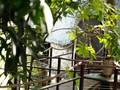 """Singularidad del único modelo de """"casas en los árboles"""" en Hanoi"""