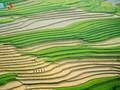 Mu Cang Chai: Schönheit des farbenfrohen Bilds