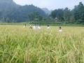 Провинция Баккан сотрудничает с другими провинциями в поиске рынка сбыта сельхозпродукции