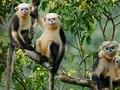 Animaux menacés d'extinction au Vietnam