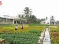 槟椥省实施新农村建设计划过程中的变化