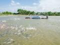 越南力争2020年 水产出口80至90亿美元