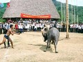 The Ma's buffalo sacrifice ritual dedicated to Jade Emperor