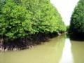 Un modelo de gestión de manglares litorales ayuda a recuperar el escudo frente al desastre natural