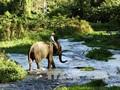 La preservación urgente de elefantes en la provincia altiplana de Dak Lak