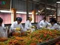 Promoción de conexión, clave para el crecimiento de las exportaciones de los productos agrícolas vietnamitas