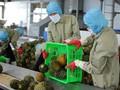EVFTA - Oportunidad para mejorar la gestión empresarial y aumentar las exportaciones agrícolas de Vietnam
