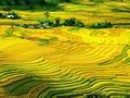 Les champs de Mù Cang Chai parmi les destinations les plus colorées au monde
