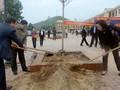 Baumanpflanzfest in Yen Bai