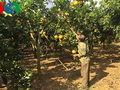 山萝省发展高科技农业