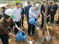 Yen Bai responds to New Year tree planting festival