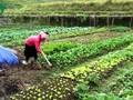 Saudari Hoang Thi Can mengatasi kesulitan dan pandai melakukan usaha ekonomi