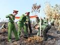 Provinsi Yen Bai menyambut Pesta Penghijauan