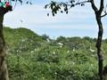 Parque de cigüeñas de Bang Lang ofrece especialidad turística del sur de Vietnam