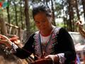 手織りの維持に取り組むモクチヤウ省