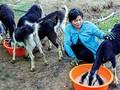 気候変動に対応する農業生産モデルに励むディンさん