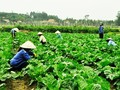One Commune, One Product program develops rural economy