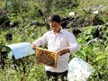 Growing safe vegetables and keeping bees reduces poverty in Ha Giang