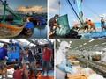 ベトナム、持続可能な漁業開発を目指す