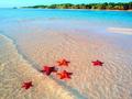 美丽的富国岛海星滩