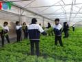 Schüler der Provinz Lam Dong betreiben Hightech-Landwirtschaft