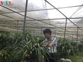 Penanaman pohon bunga anggrek tanah membantu warga Kecamatan Ta Phin lepas dari kemiskinan
