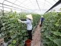 Memperhebat penelitian ilmu pengetahuan teknologi untuk membangun pedesaan baru