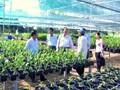 Ekonomi kepala keluarga turut mengembangkan dukuh di Provinsi perbatasan Lai Chau