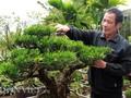 Kisah di desa pohon bonsai Vi Khe