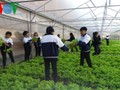 Школьники в провинции Ламдонг занимаются высокотехнологичным сельским хозяйством