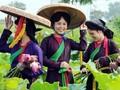Bắc Ninh gìn giữ di sản văn hóa
