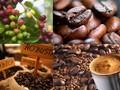Bebera jenis  produk pertanian utama yang diekspor oleh Viet Nam
