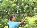 Farmer pioneers intercrop model