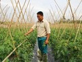 Ethnic youngster successful with safe vegetable growing