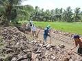 Agricultores en el Delta del Mekong cambian su forma de cultivo para adaptarse al cambio climático